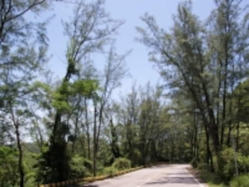 自然林の中を抜けての移動