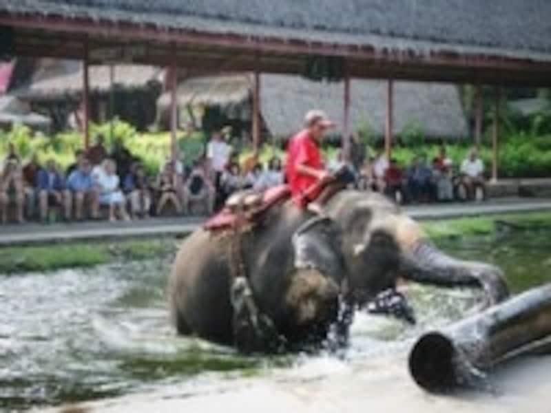 ローズガーデン,タイ文化,象