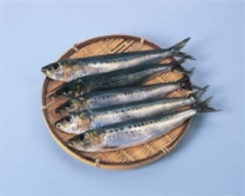 いわし,魚,たんぱく質