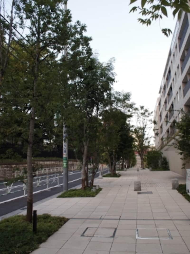 東側の並木道