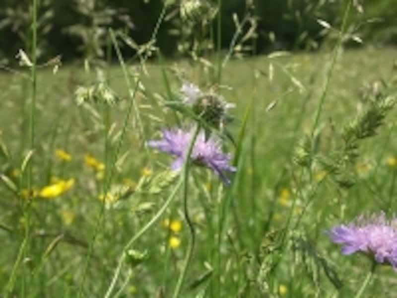 コンテ地方に咲く花々