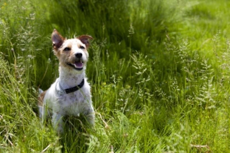 草むらで遊ぶ犬