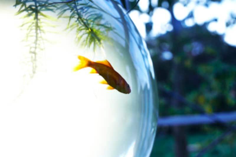 外出時、金魚の餌やり・水換え・水温はどうするのか