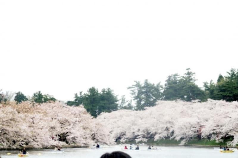 弘前城公園の桜
