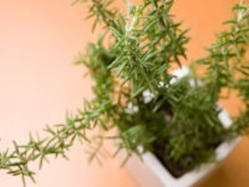 植物のパワー。花や樹木の香り。日頃のケアが身体から出す匂いを変えるかもしれません!