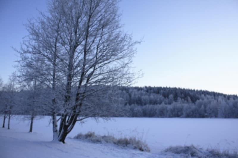 フィンランドの雪景色