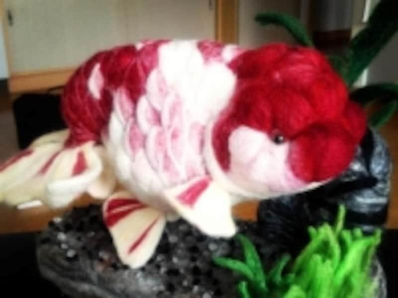 モザイク透明鱗が特徴である桜錦。透明鱗も絶妙に表現されている