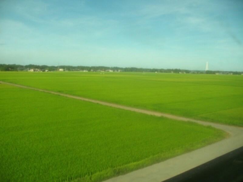 広大な緑色の田んぼのど真ん中に停車