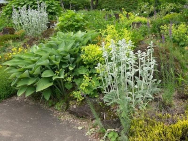ペレニアルガーデンとは?何年も楽しめる庭を作る方法