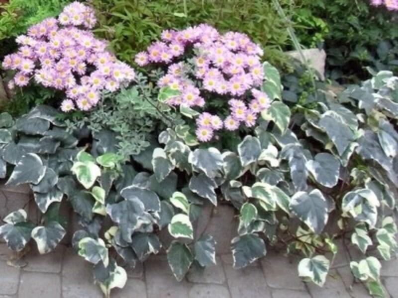 季節に関係なく楽しめる葉物も活用しよう