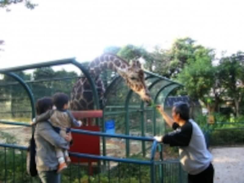 野毛動物園
