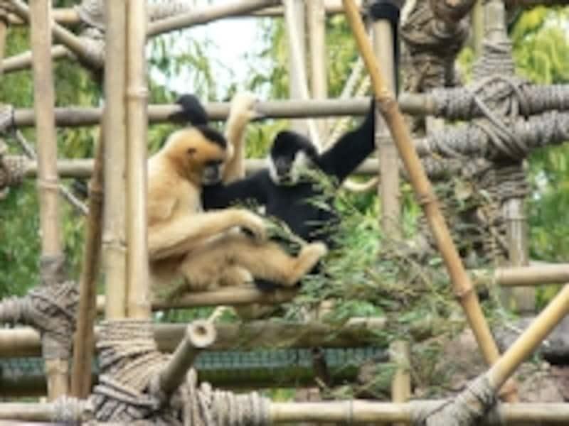 遊園地と動物園のコラボレーション。たくさんの動物に合うことができる。(C)Raul654
