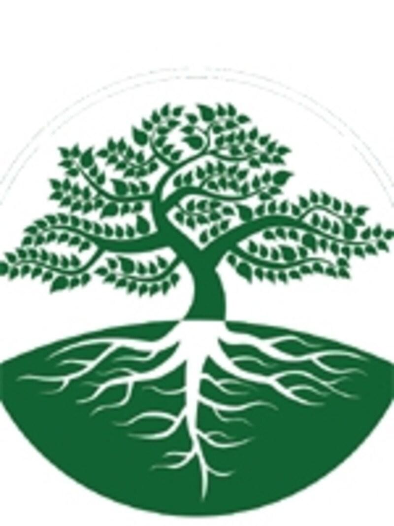 植物の根と枝の関係