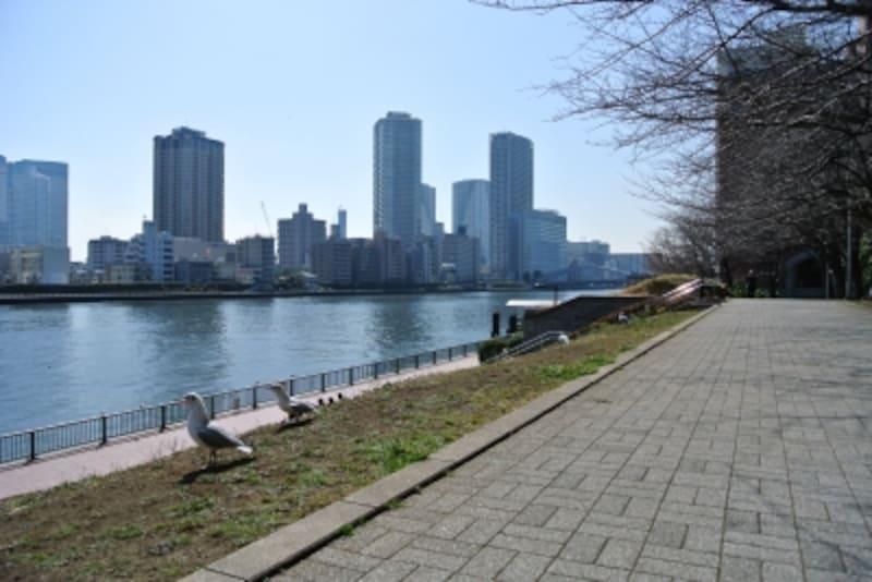 聖路加ガーデンから隅田川のほとり