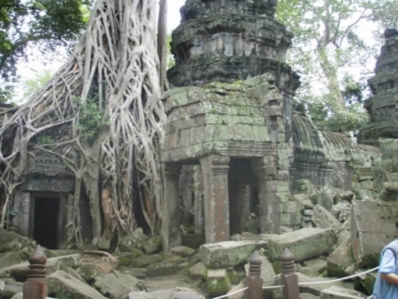 遺跡と木の根が絡まるアンコールワット