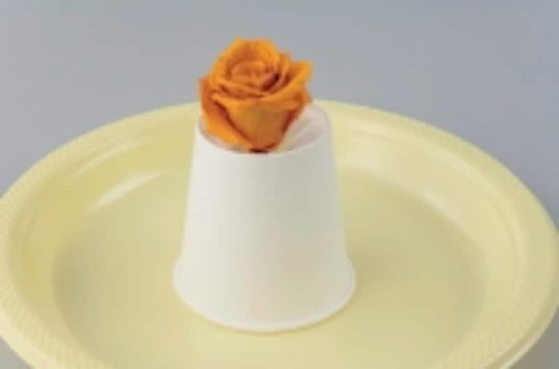 紙コップでの乾燥