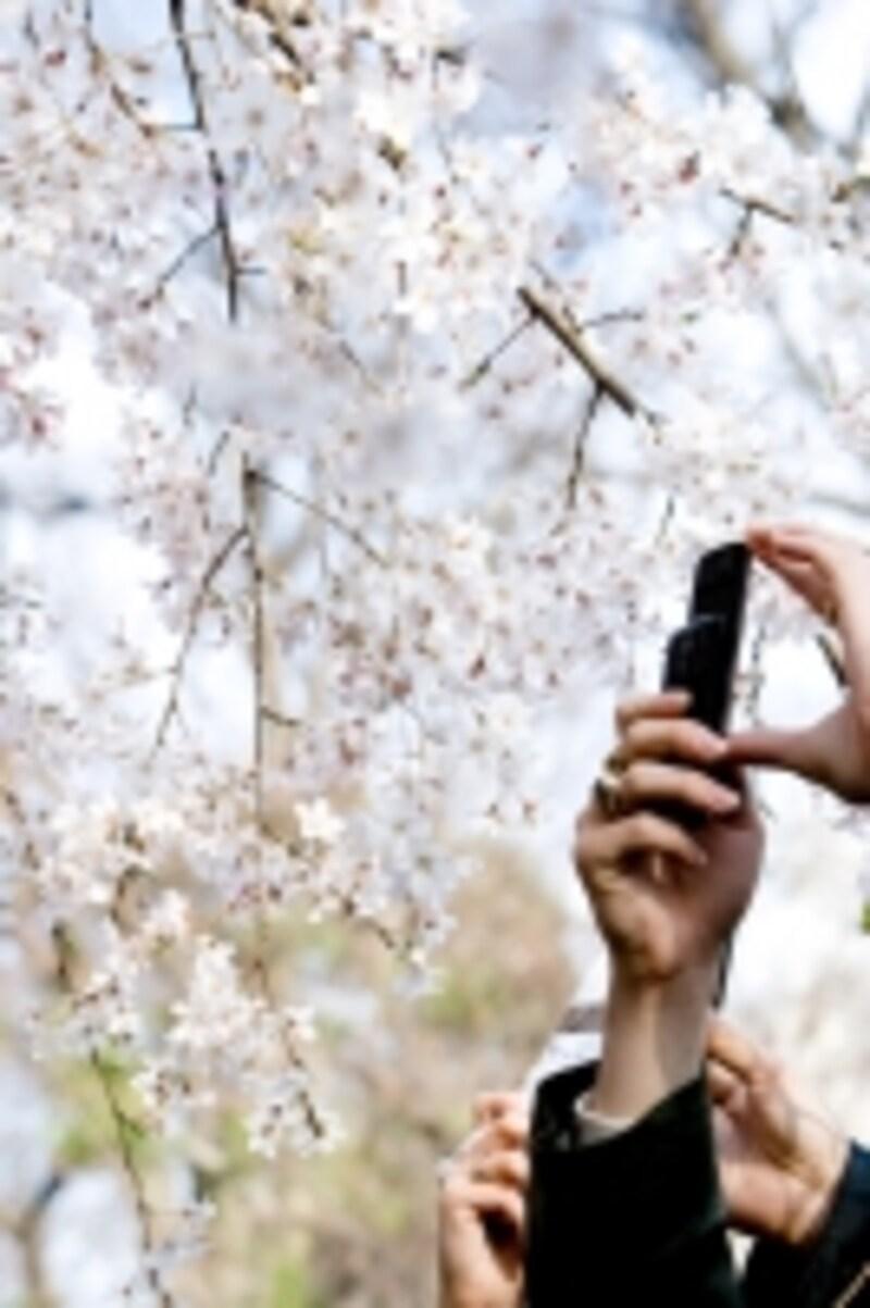 この春、子どもに携帯を持たせる方も多いのでは?