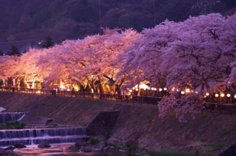 宮城野早川堤の夜桜