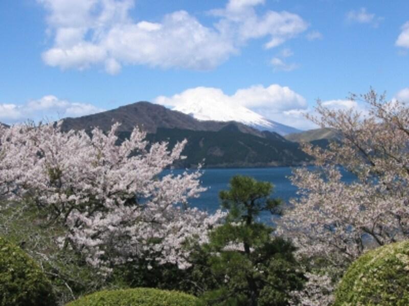 恩賜箱根公園の桜