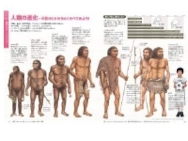 人類の進化は9歳の男子平均と比較。子供図鑑ならではのわかりやすさです