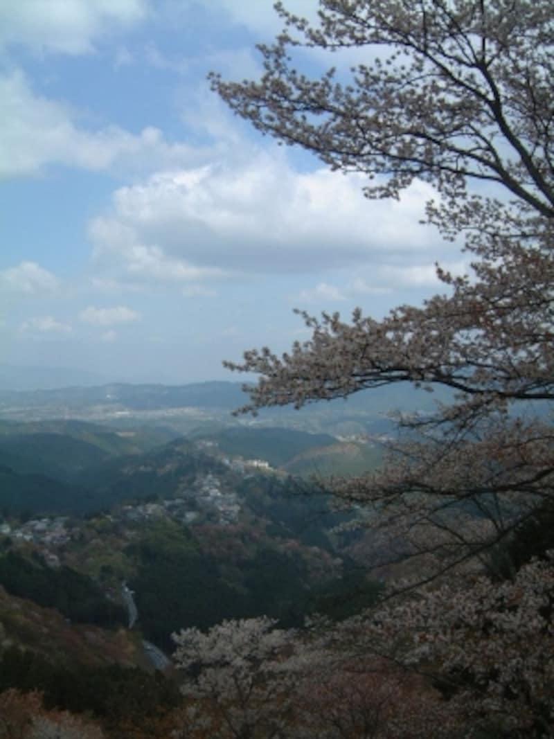 上千本・花矢倉展望台から桜と共に中千本、下千本を望む(1)