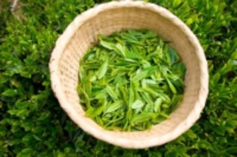 お茶の葉の写真