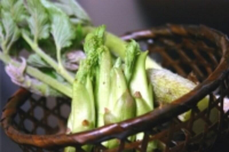 山菜,食中毒