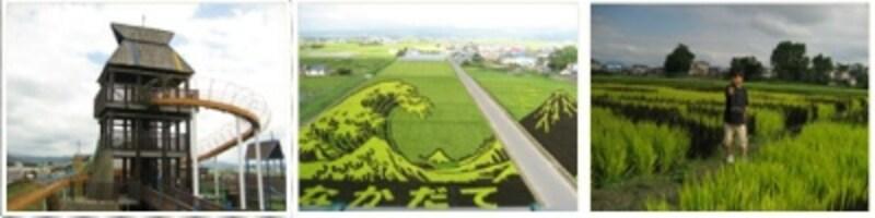 青森県田舎館村の田んぼアート