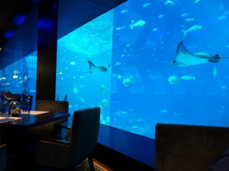 OceanRestaurantbyCatCora