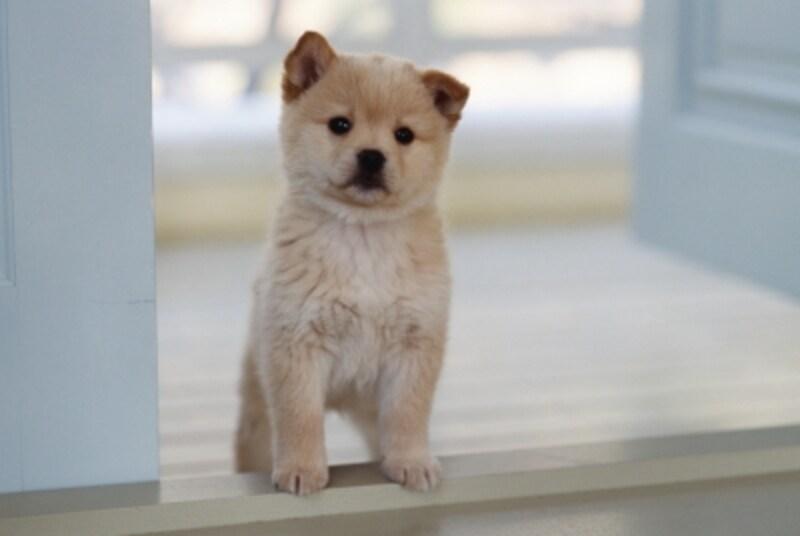 子犬が来てから慌てないように、前もって必要品を揃え、ある程度の知識や情報を得ておく。