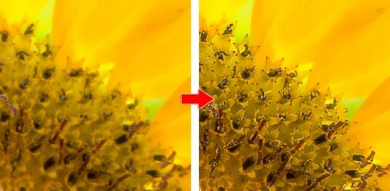左が補正前、右が補正後。花粉の粒が見えるほどにくっきり!