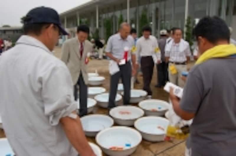 洗面器を前に金魚を審査する審査員