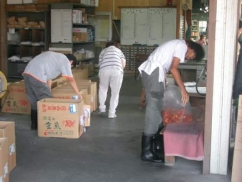 金魚を小売店へ出荷するための梱包作業風景
