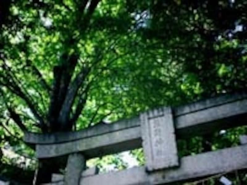 熊野詣、今熊野神社、頭痛寺、後白河上皇