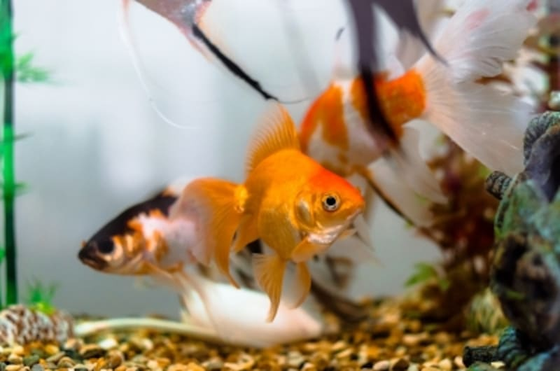 金魚の生臭い嫌なニオイの対策をしよう