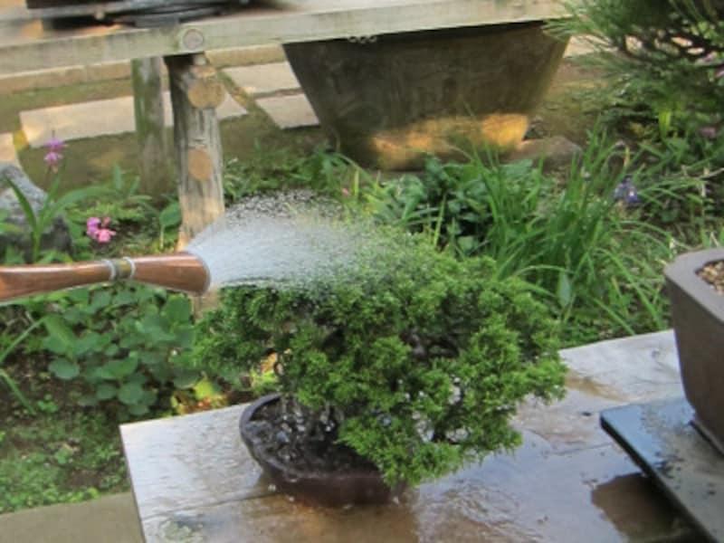 写真のように根元にハス口をあて、鉢に沿ってまわすように水をかけましょう