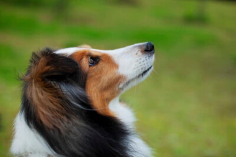 犬にも得意な匂いと苦手な匂いがある。