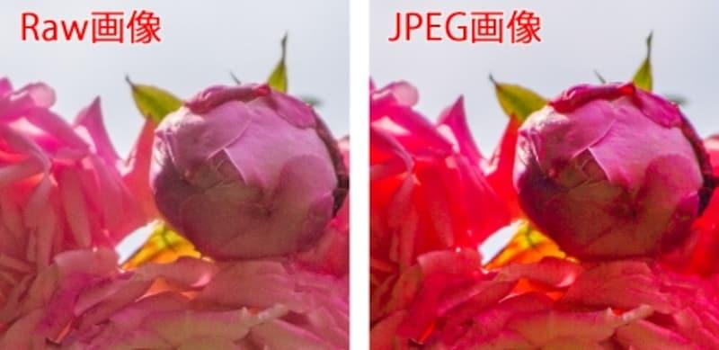 同じ逆光の花に同じ補正をして明るくした例。左のRaw画像は花びらの詳細まではっきり形が再現されているが、JPEGは色がつぶれてしまっている。