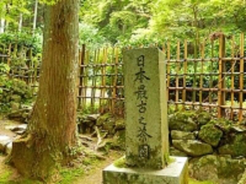 京都栂尾にある、日本最古と称される茶園を示す石標