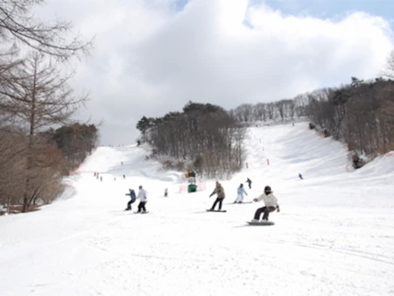 写真スキー