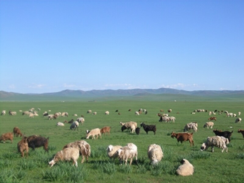 かつてチンギス=ハンが駆け抜けたモンゴルの青い草原の彼方に悠久の思いを馳せる