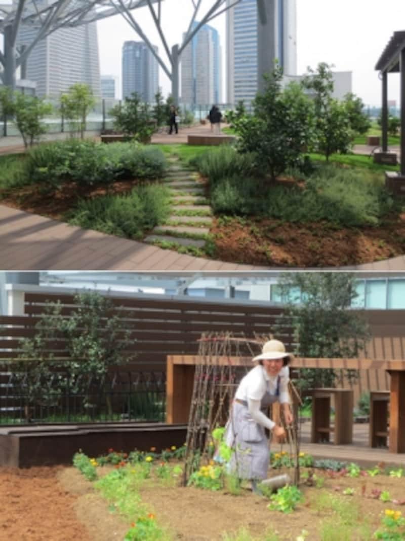 5階屋上にある「みんなの庭」では、イベントを通じて種まきや収穫体験などが行われる予定