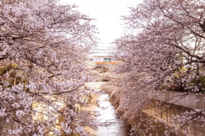 神田川(現地より約440m/徒歩6分)