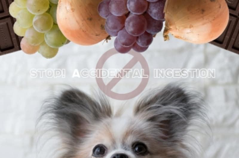 犬undefined与えていいundefined与えてはいけないundefinedNG食材undefinedダメな食材undefined健康に悪い食材undefined致死量undefined