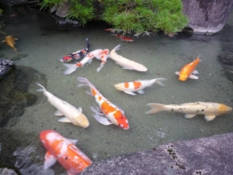 三百余年の歴史が息づく廻遊式日本庭園undefined