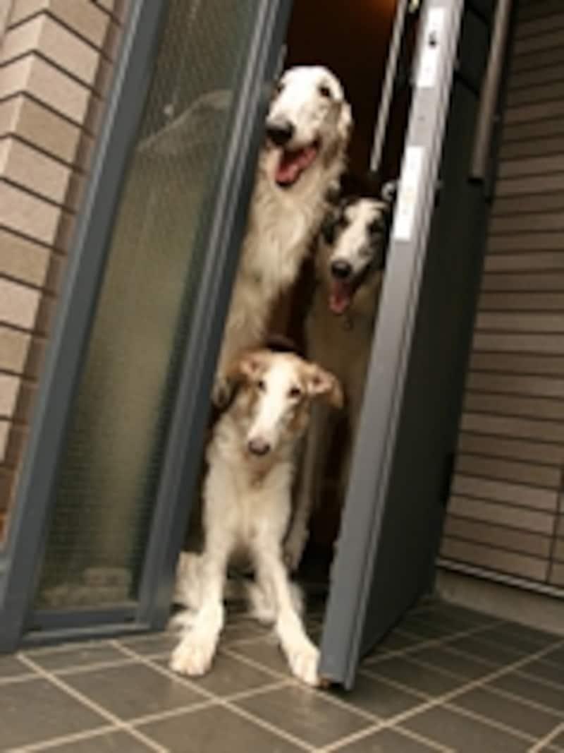 玄関の第一印象がその家のイメージになる。