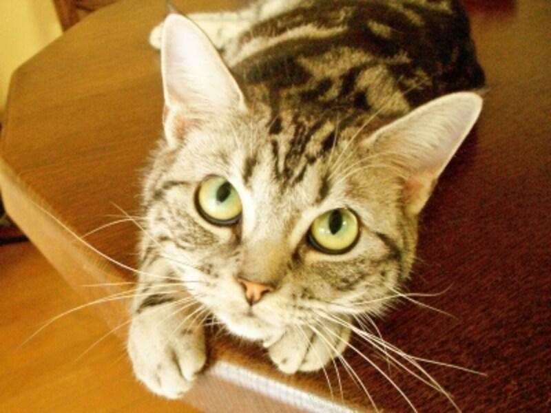 猫undefinedリフォームundefinedコツundefined費用undefinedストレス
