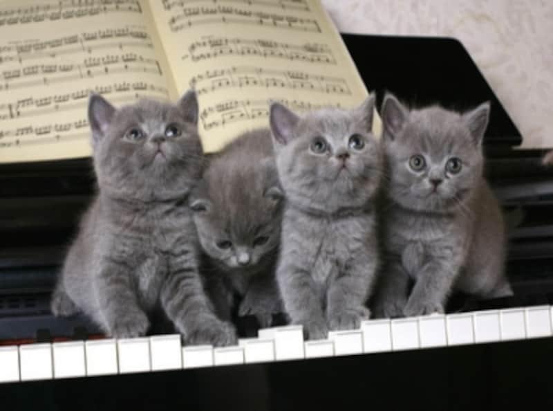 ピアノと鍵盤の写真
