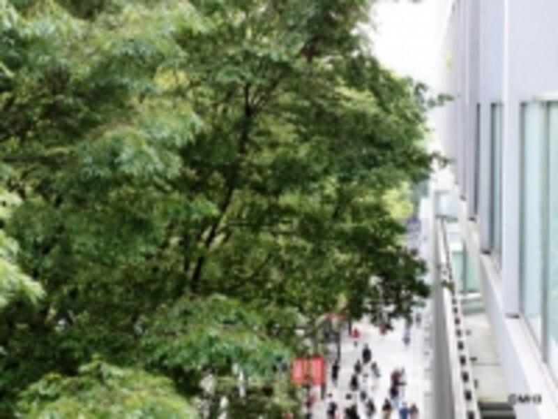 「表参道ヒルズゼルコバテラス」のバルコニーから表参道を見る