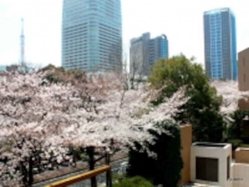 「アークタワーズ」(赤坂1丁目)から東京タワーを臨む(2012年4月撮影)